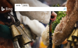 マイクロソフトの検索エンジン・ビング(bing)は1月24日までに遮断された模様(スクリーンショット)