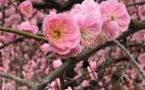 防府天満宮は梅祭りで、境内いっぱいに梅の花が咲き誇り、花の香りに包まれていました(写真/正恵)