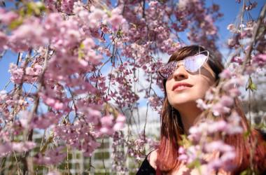 今年もニューヨーク市のブルックリン植物園では、桜まつりが開催される。同園には100年の歴史を誇る米最古の日本庭園がある (Photo by Leon Neal/Getty Images)