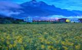 国際スローシティ 鳳林鎮(台湾観光局提供)