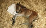 (Facebook | The Mare & Foal Sanctuary)