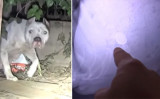 (YouTube Screenshot/Hope For Paws - Official Rescue Channel)