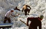 人権団体ヒューマン・ライツ・ウォッチ中国担当は、強制収容所のある新疆で生産された「新疆綿」をPRする、無印良品やユニクロの広告に疑問符を打つ(Getty Images)