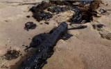 トングリ砂漠に黒色の汚染物質が放置されている(スクリーンショット)