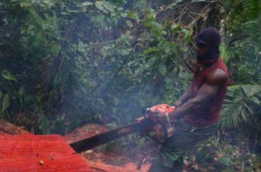 熱帯雨林の地域で森林伐採する製材業者(Amindeh Blaise Atabong for The Epoch Times)