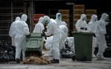 2020年2月1日、中国国内メディアは、湖南省で鳥インフルエンザが発生したと報告した。写真は2014年、香港で鳥インフルエンザ流行時に撮影された市場の様子、担当職員が処分にあたる。参考写真(GettyImages)