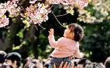 2006年4月、東京の上野公園で、幼い娘に満開の桜を見せる父親(Getty Images)
