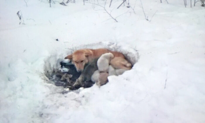 (Photo courtesy of Red Lake Rosie's Rescue)