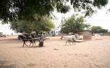 セネガルで中国へ輸出用のピーナッツを運ぶ馬、参考写真(GettyImages)