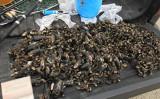 米カリフォルニア州ロサンゼルス市検事は9月17日、密漁したとして中国人を含む45人を起訴した(ロサンゼルス市検事より)