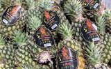 日本にも輸出されている台湾産パイナップル(台北駐日経済文化代表処のツイッターアカウントより)