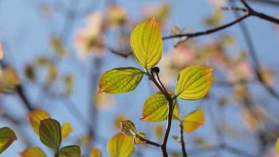 Coniferconifer/Flickr
