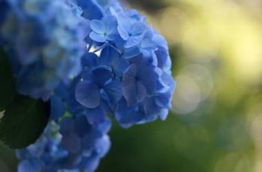 Takashi .M/Flickr