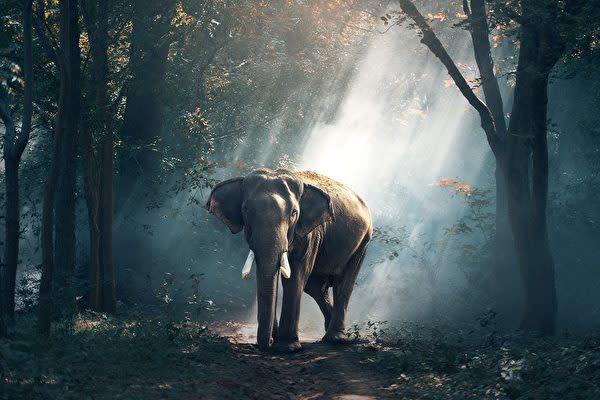 インド南部ケララ州の村で病死したゾウの調教師の葬儀に、弔問のため会いに来たのは、故人の「親友」のゾウでした。(写真は本文とは関係ありません)(Pixabay)(Pixabay)