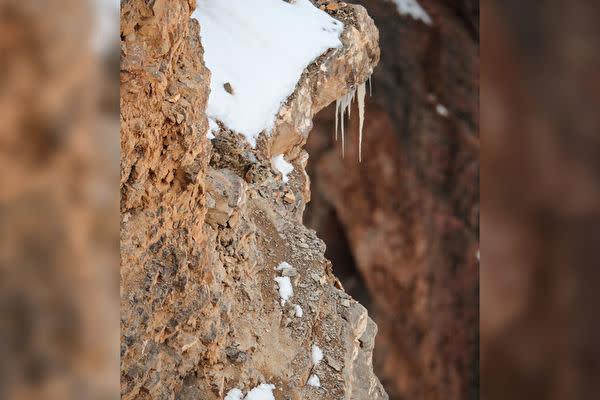 インドの野生動物写真家Saurabh Desai氏はインド北部のヒマラヤのある断崖絶壁で、岩の間に隠れている珍しいユキヒョウを撮影したことがあります。毛の色は周囲の環境とほとんど一体となっており、よく見ないと見分けがつきません。ユキヒョウを見ましたか?(Saurabh Desai提供)