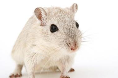 マウスのイメージ写真(Pixabay)