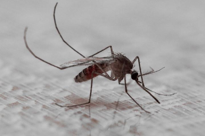 ロシアのカムチャッカ地方では、初夏に蚊が大量発生する。地元住民は蚊柱ならぬ蚊の竜巻を撮影した。参考写真(spongebabyalwaysfull、Public Domain)