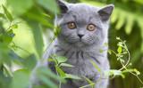 アメリカの動物霊能者であるロリ・スパグナは、子猫は異なる次元を超えられると主張しています(SvetlanaA / PIXTA)